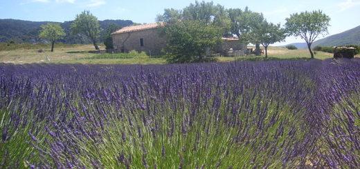 Odpočinek najdete v Provence