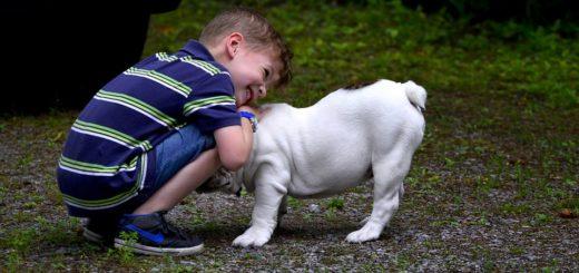 Psí plemena a děti